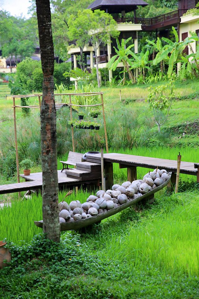 Spa days and rice fields in Chiang Mai. Thailand by the Belle Blog