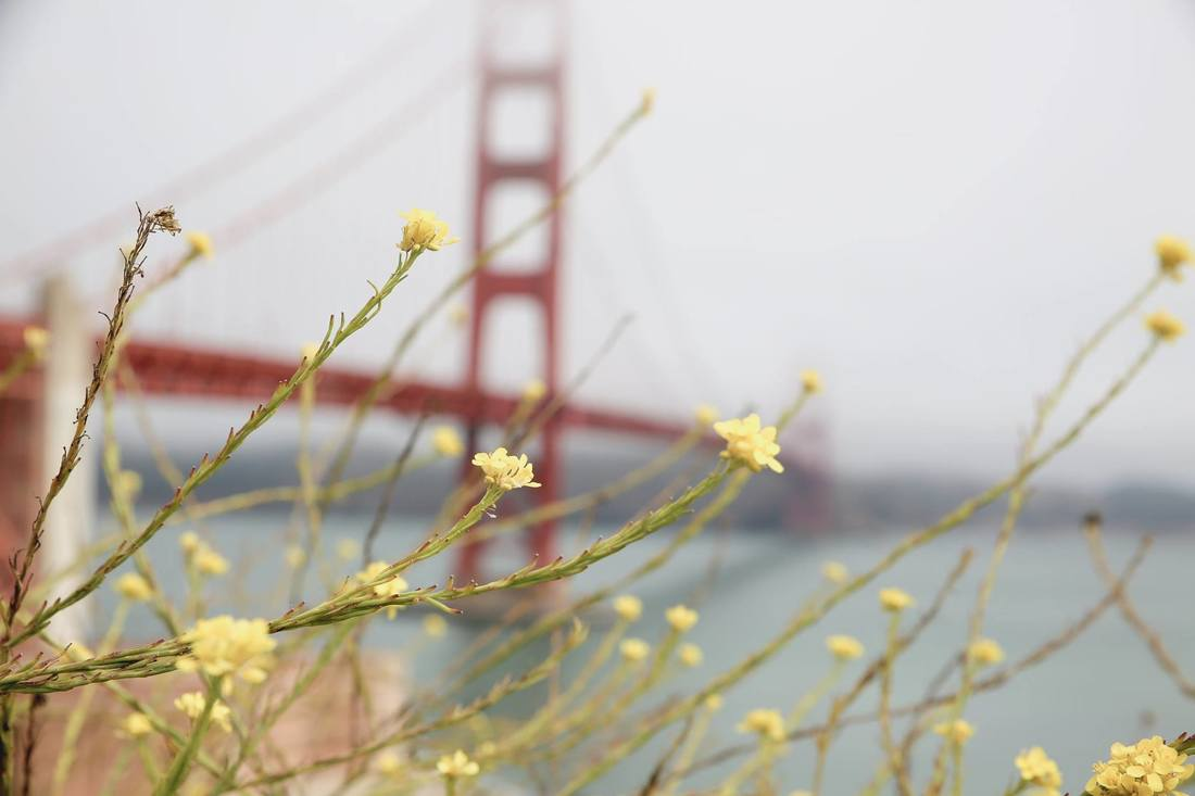 Take a Trip Over the Golden Gate Bridge by The Belle Blog