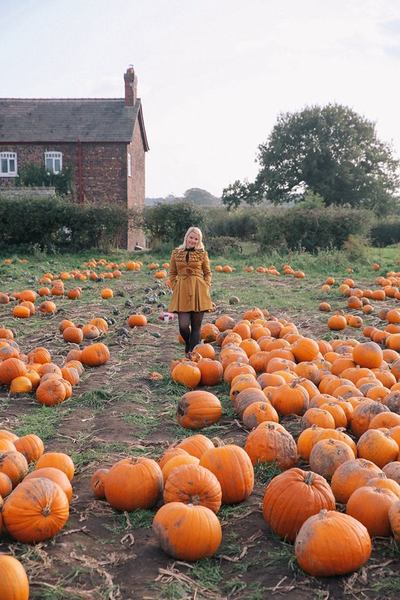 Pumpkin picking at Red House farm by The Belle Blog