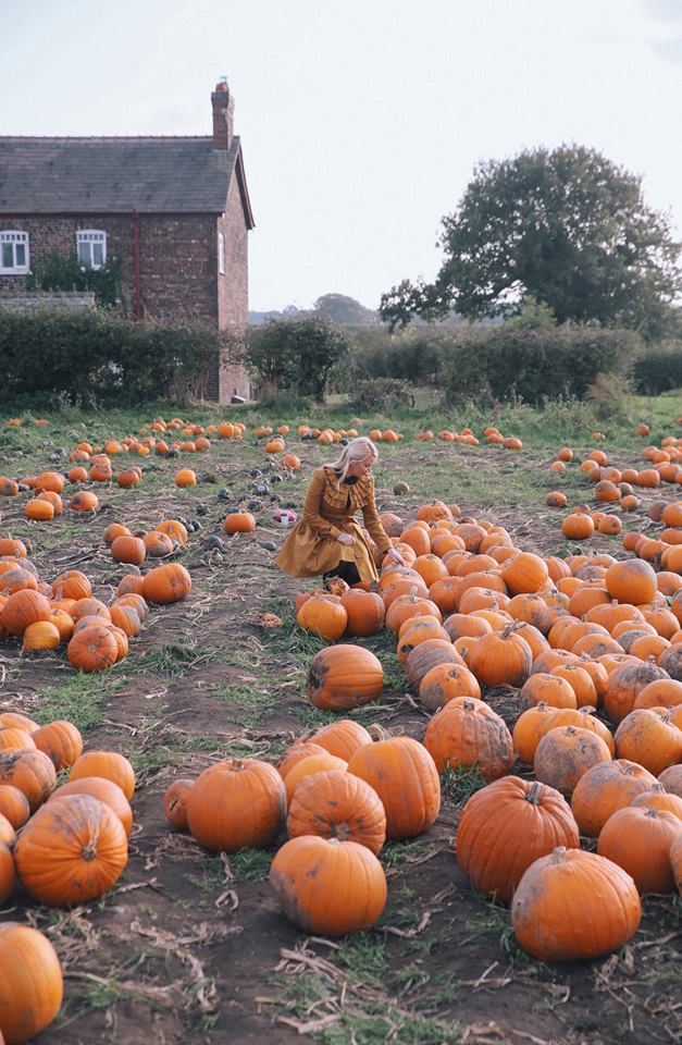 Pumpkin picking at red house farm, Altrincham by The Belle Blog