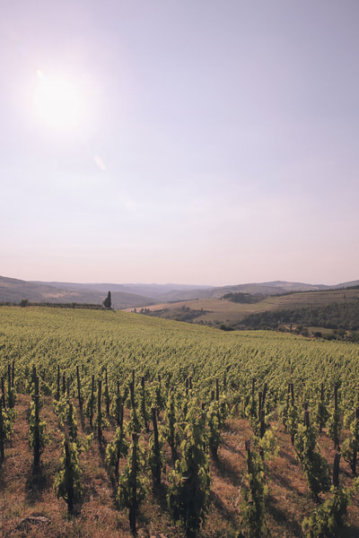 Discovering Volterra and San Gimignano on a Tuscan road trip by The Belle Blog